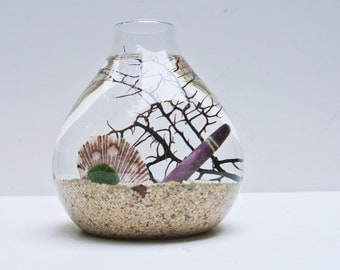 Urchin's Spotted Gaze Aqua Terrarium  - Marimo Ball, Japanese Moss Ball, Living Home Decor, Gift, Aquarium, Sea Fan, Sand, Sea Shells