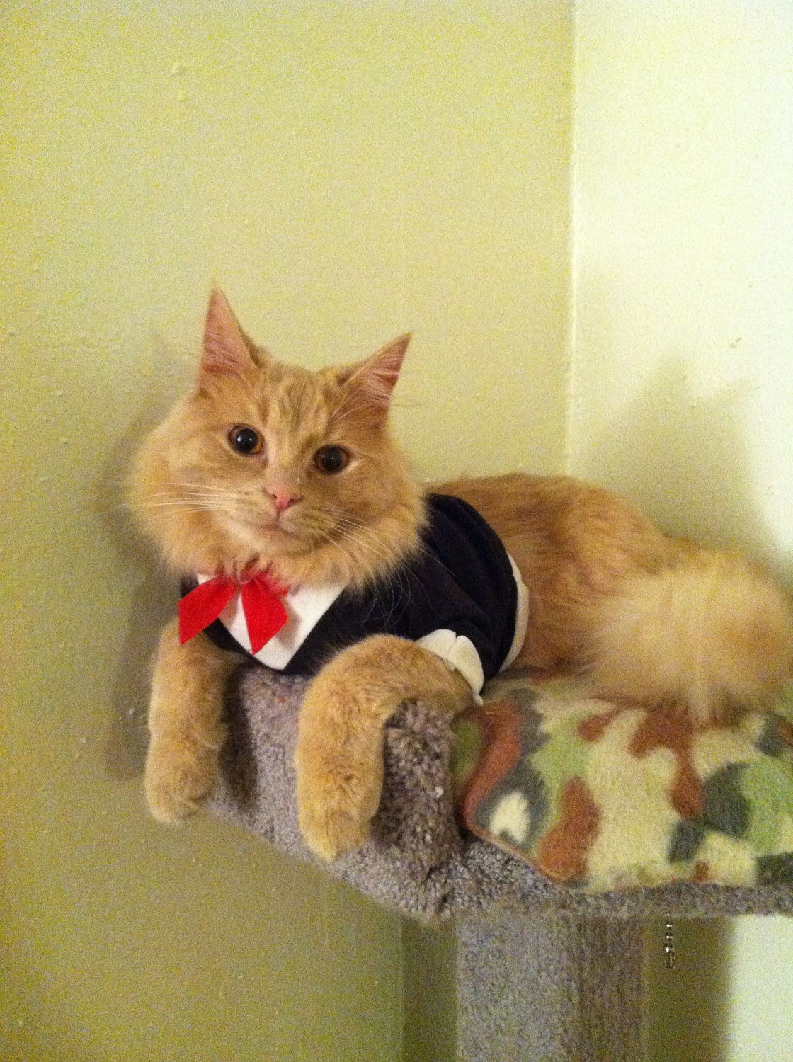 Tuxedo with fancy red bow cat clothes for Red transparente para gatos