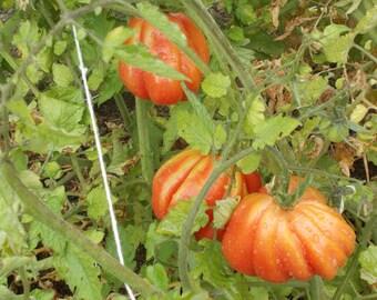Garden harvest Etsy