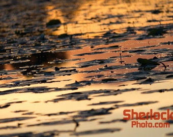 Sunset reflection with Lily Pads - Image 03032