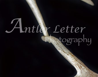 SALE-Letter Z, Antler, Whitetail Buck Shed, Photography, Alphabet, Hunting