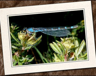3 Dragonfly Photo Note Cards - Dragonfly Note Cards - 5x7 Dragonfly Cards - Blank Dragonfly Greeting Cards (IN126)