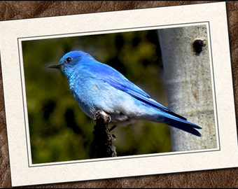 3 Bluebird Photo Note Cards - Bluebird Note Cards - 5x7 Bluebird Cards - Blank Note Cards - Bluebird Greeting Cards (IN124)