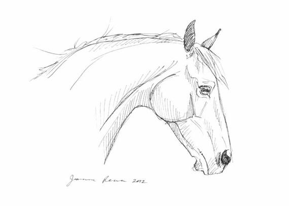 """Horse art original pen & ink horse drawing sketch """"Head Study"""""""