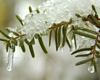 ICICLES on Evergreen Tree - Pennsylvania  - BLANK 5 X 7 Winter NOTECARD frameable Art Photo with Free Origami Crane - December Scene