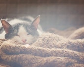 pet photography, cat photograph, animal lovers gift, sunshine, cozy knitted blanket, cute sleeping kitty, white gray brown, kids room