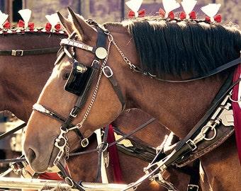 horse photography - All the King's Horses - 8x8 - rustic home decor country farm photo fall fair