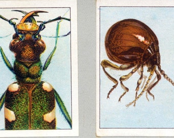 1932 Vintage Spanish Sheet of Illustrations on Curious Insect Heads. Sheet 31