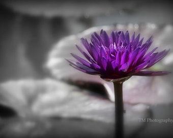 Nature Photography - Purple Flower - Flower Print - Wall Art - Fine Art Photography