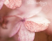 Dreamy Macro Photograph, Autumn Burgundy, Pink, Flower Photo, Nursery Decor, Floral Wall Art, Fall Decor