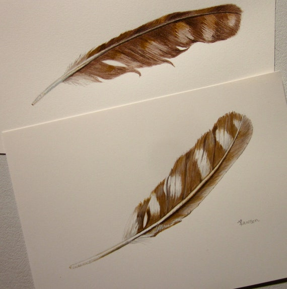 Warm brown feathers -- pair of original drawings -- watercolour and coloured pencil