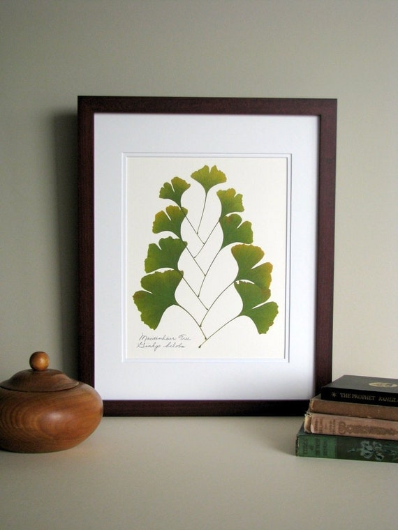 Pressed Leaves Print 11x14 Double Matted Ginkgo Leaves