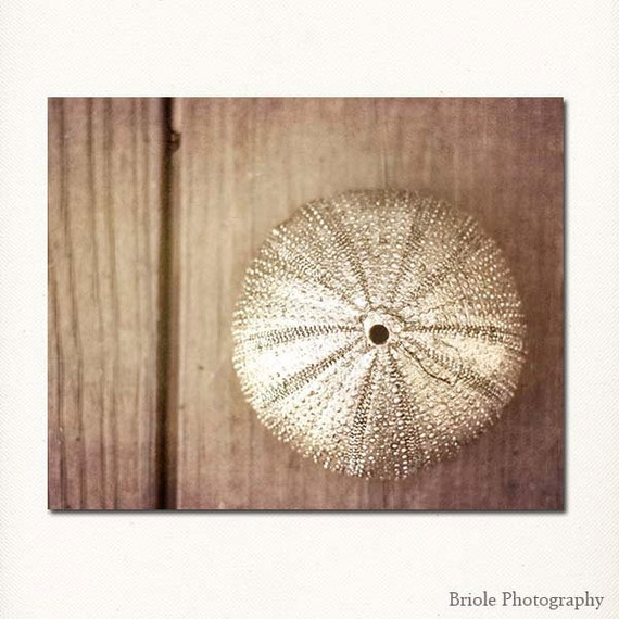 """Still Life Photograph """"Sea Urchin"""" photography affordable fine art print silver brown wall art home decor nature for her"""
