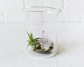 10% SALE - Mini Tiny Science Beaker w/ Magic Matrix Quartz Air Plant Planet Live Inside - Terrarium Container - Spring Gift