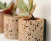 Mini Succulent Cork Magnets, Mixed Set of 3