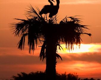 Photograph Birds Enjoying a Florida Sunrise on Palmtree