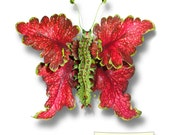 Colicky Coleus 5x7 greeting card