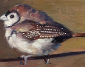 Double-barred Finch - Bird Painting - Open Edition Print of Original Oil Painting