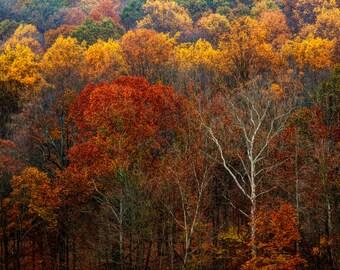 Nature Photography, Autumn Morning, Mountain, Fall Foliage, Landscape Photograph, Rust, Trees , Color, Art Print, Home Decor
