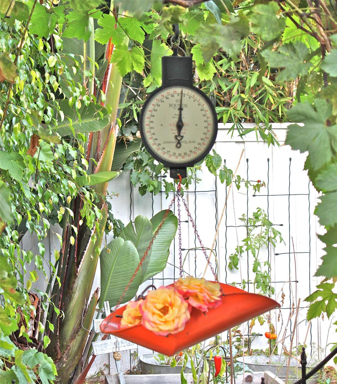 Vintage Hanging Kitchen Scale: SALE ITEM Vintage Hanging Scale Farmhouse Fresh Produce