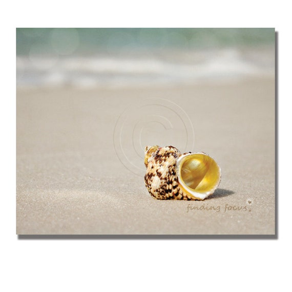 Seashell Photography Golden Spiral Sea Shell Beach Photo, Gold Taupe Sand Pale Blue Water Bokeh Shabby Coastal Cottage Decor 8x10 Photograph