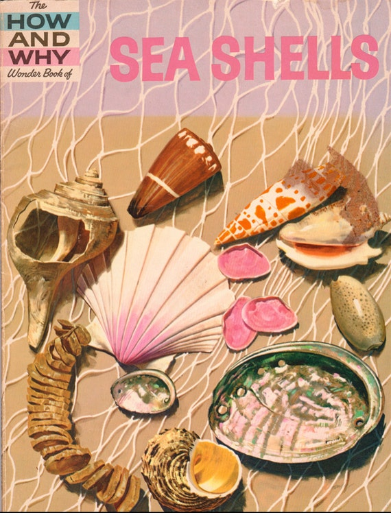 The How and Why Wonder Book of Sea Shells
