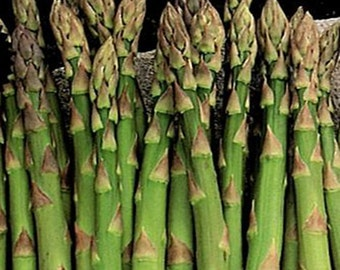 Mary Washington Heirloom Asparagus Seeds Non GMO
