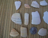 Broken shells, seashell mosaic pieces, natural sea shells, home beach decor, crafts, jewelry supplies (Lot 158)
