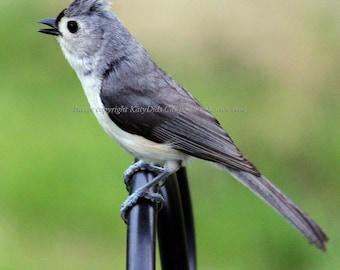 Bird Fabric Block - Titmouse Sings To His Lady Friend Cotton Fabric Block