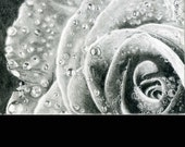 Original ACEO Rose with water droplets,  Photo Realistic  Pencil Drawing by Cliff Sperandeo, 2.5 X 3.5