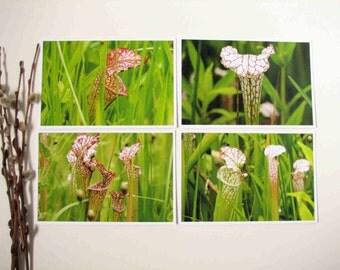 postcards for framing or mailing, 4x6 garden postcards, pitcher plants postcards