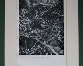 1938 Whinchat Vintage Print - Bird Nest - Wildlife - Nature - Black & White Photograph - Antique Picture - Ornithology