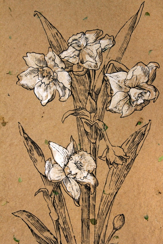 White Narcissus Black Ink Drawing Handmade Paper Original
