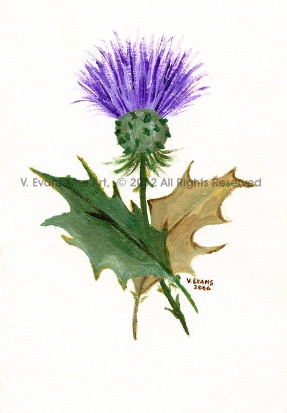 8 x 10 inch Fine Art Print RAE Thistle by CelticGrace on Etsy
