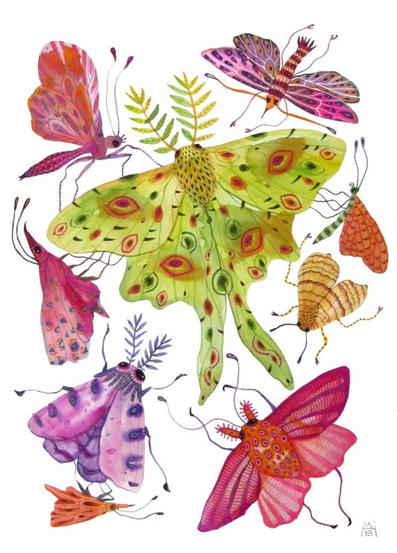 butterflies luna moths insects tropical large original gouache painting