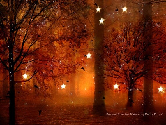 Fall Color String Lights : Nature Photography Surreal Haunting Fairy Lights Stars Trees