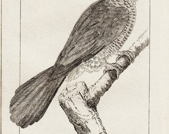 1792 antique elegant PARROT engraving by Buffon,The colorful parrot, 220 years old rare print