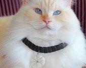 MY STAR cat hair necklace