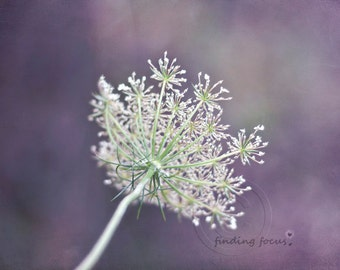 Nature Photography, White Queen Anne's Lace, Lavender Violet Purple Mint Green Wildflower Dreamy Wall Hanging, 11x14 Flower Photo Art Print