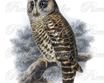 OWL Instant Download Digital image, Digital Downloads, brown owl birds clipart 218