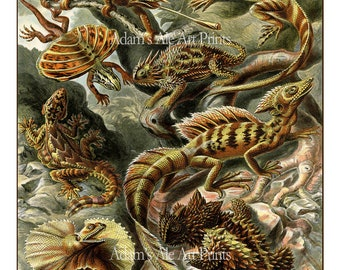Ernst Haeckel Lizard Illustration, Lizard Poster, Lizard Art Print, Natural History Wall Decor, Wall Art, Reptile Art, Haeckel Print