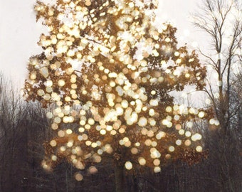 Nature Photography, Sparkling Fairy Lights Fantasy Woodland Trees Print, Dreamy Sparkle Tree Birds, Autumn Fall Nature Trees Fine Art Photo
