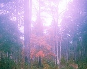 Nature Photography, Fall Decor, Pine Trees - Fall Foliage, Orange Leaves, Autumn Art, Orange and Green, Landscape - 11 x 14, Nature Print