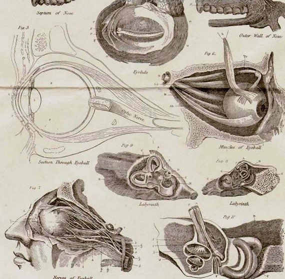 Eye Ear Nose Human Anatomy Vintage Victorian Antique Medical