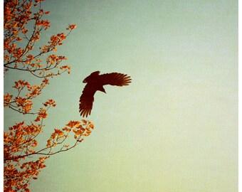 Bird Photograph - Nature Photography - Tree Art - Autumn Art - Crow Art - Fine Art Photograph - Alicia Bock - Fall Art - Oversized Print