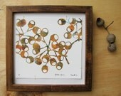 Golden Gum giclee print sewn to paper