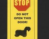 Dangerous Cesky Terrier Inside Has Killed Squeaky Toy