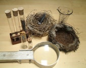 Nature Collection Magnifying Glass Bird's Nest Test Tubes