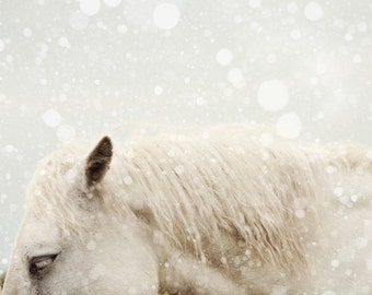 Horse Photography, Winter, Snow, Nature, Muted Animal Photograph, White, Gray, Fine Art Print, Minimal Wall Art - Snowdrops
