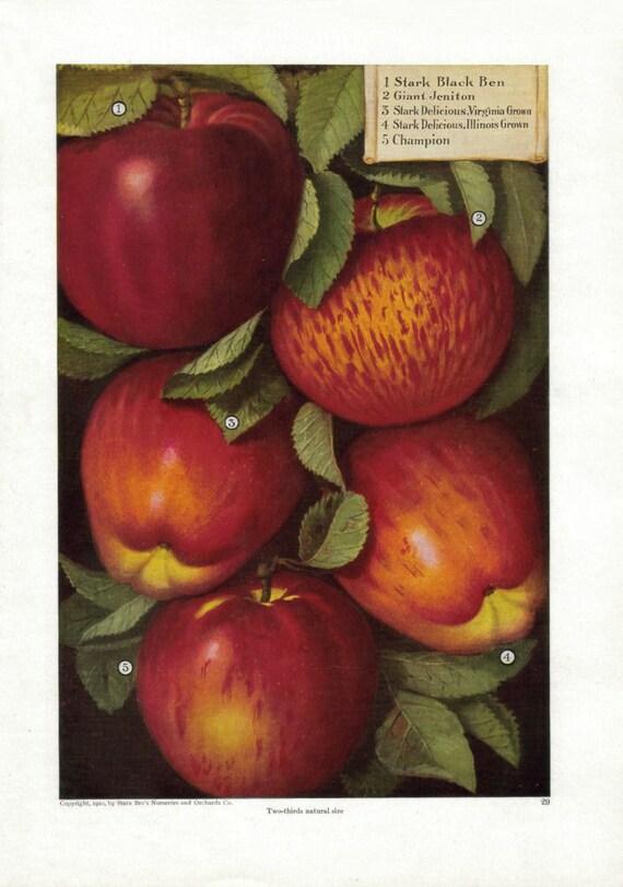 Vintage apple kitchen decor fall harvest autumn apple print for Apple kitchen decoration
